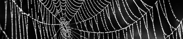 700spider_web